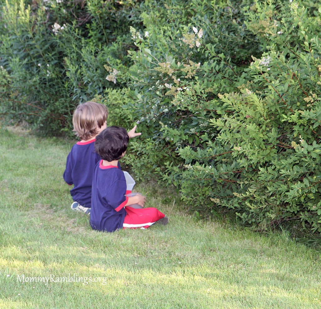 Blueberry Picking, Day Trip #OurSummerJourney